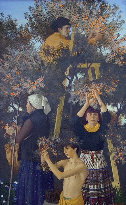 Sea-buckthorn harvesting, Michail Poletayev