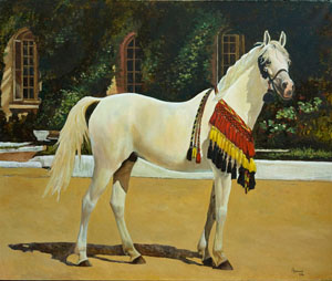 Arabian stallion Alibei